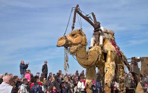 Après l'autruche (2012) et le chameau (2013 - notre photo), que nous réserve le défilé 2014 ?